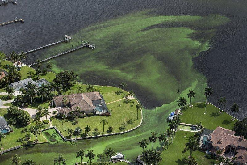 Florida Algae Solution