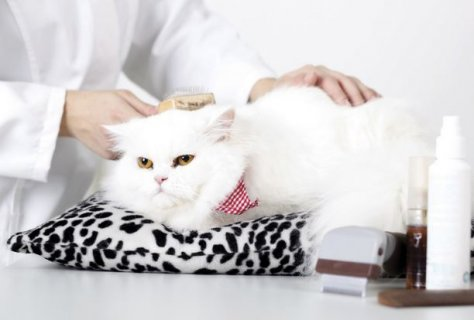 Cat Grooming Page