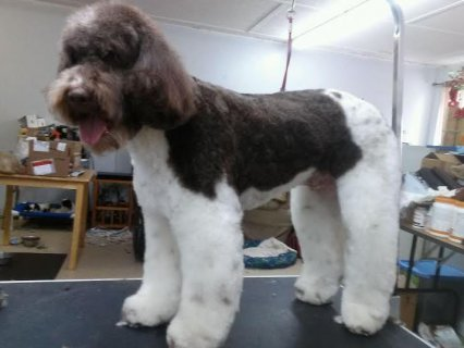 Dog Grooming Page