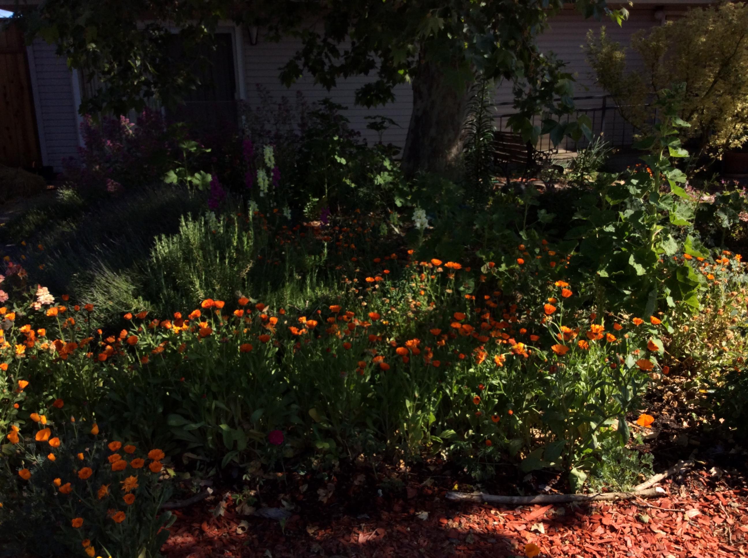 Plant Spirit Botanical Calendula