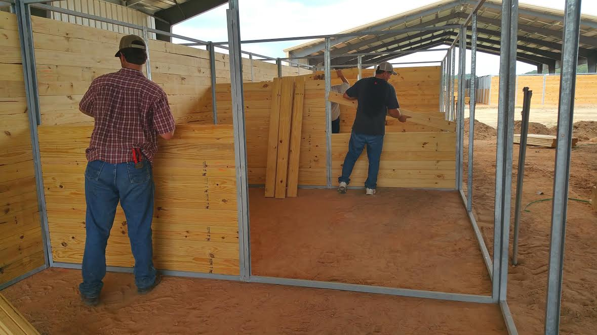 Erection of spacious 12x12 stalls.