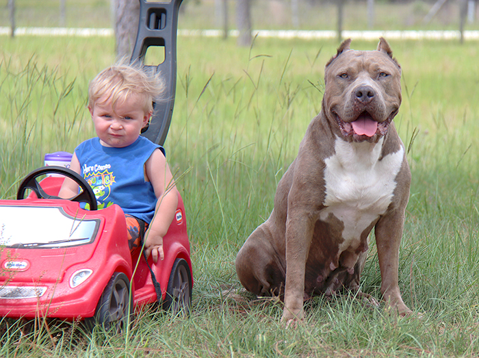Why Pitbulls Do NOT Make the Best Guard Dogs