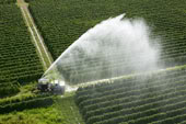 What's Up with Pesticides?
