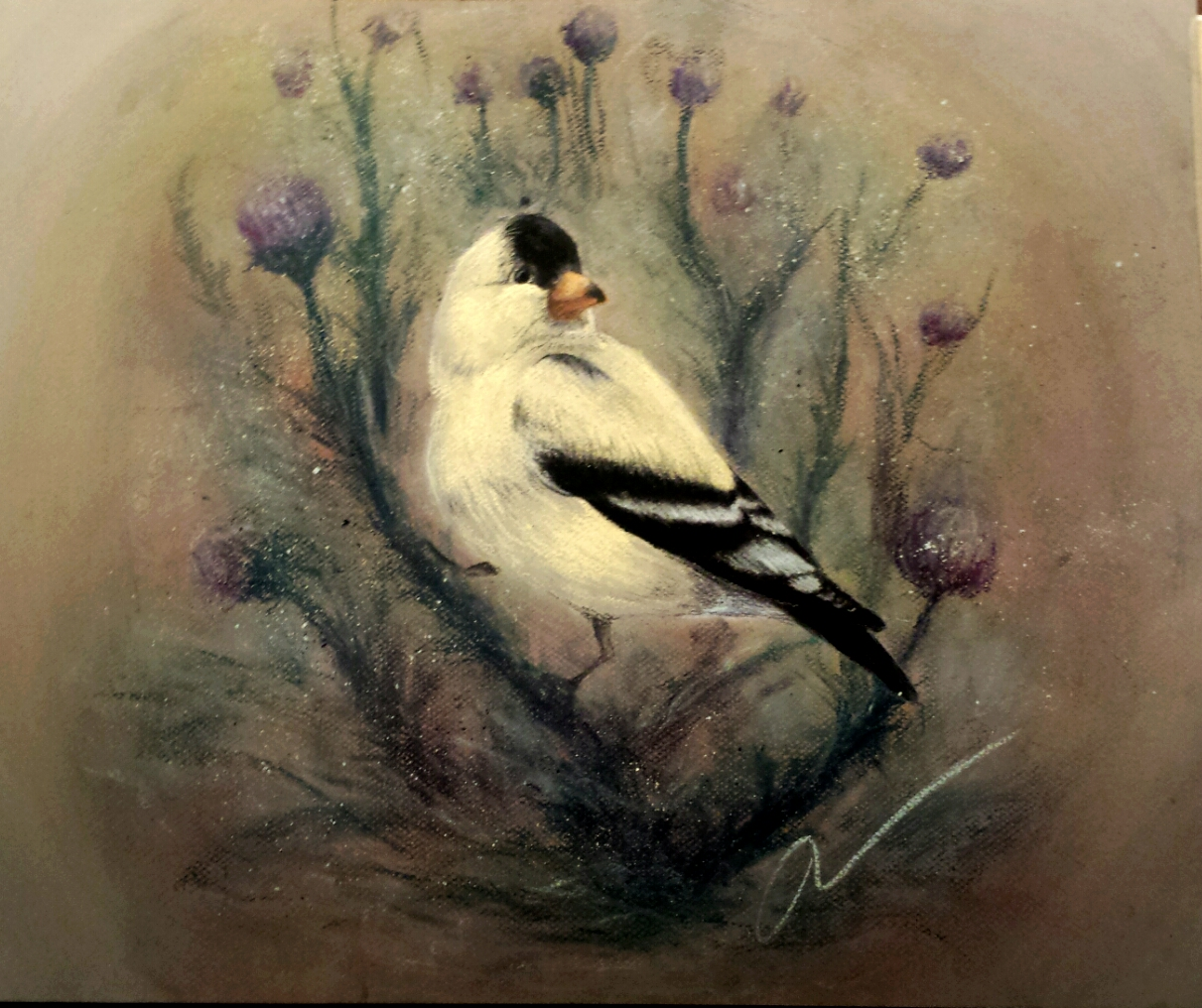 A pastel color drawing of a bird by Jess Wiley