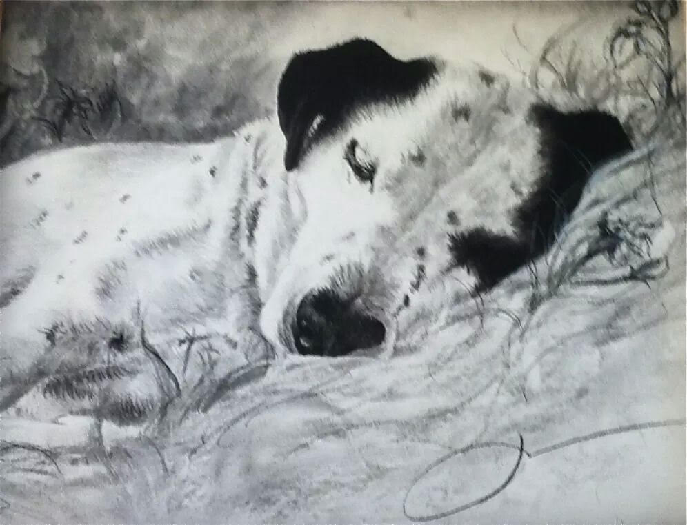 A drawing of sleeping dalmation by Jess Wiley