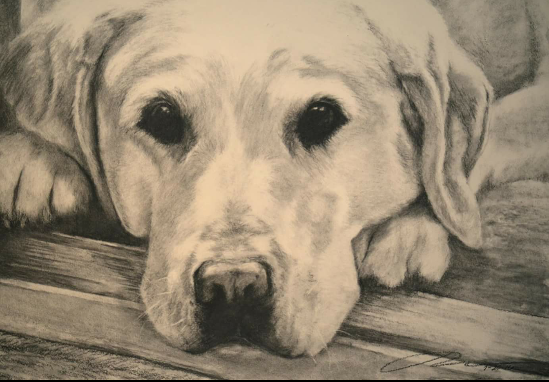 A drawing of golden retriever by Jess Wiley