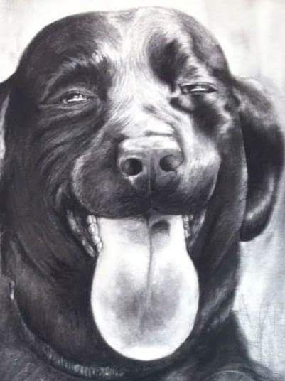 A drawing of squinty eyed black lab by Jess Wiley