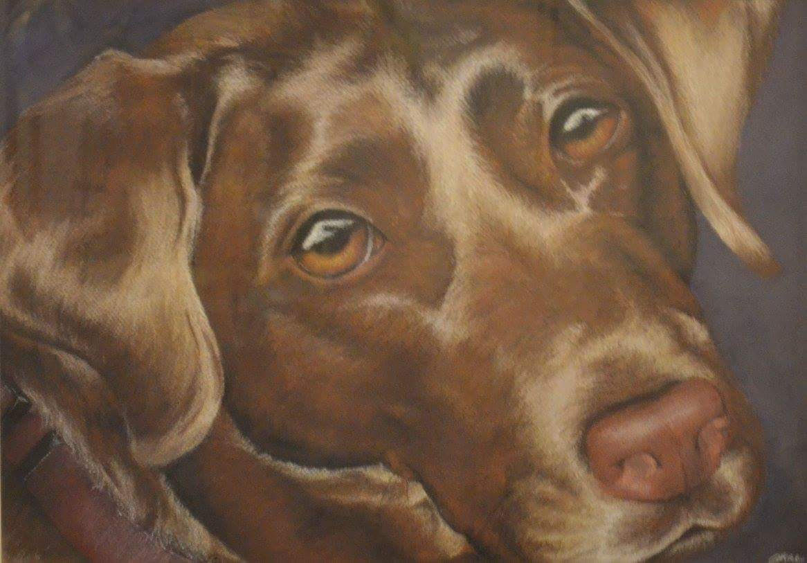 A pastel color drawing of a dog by Jess Wiley
