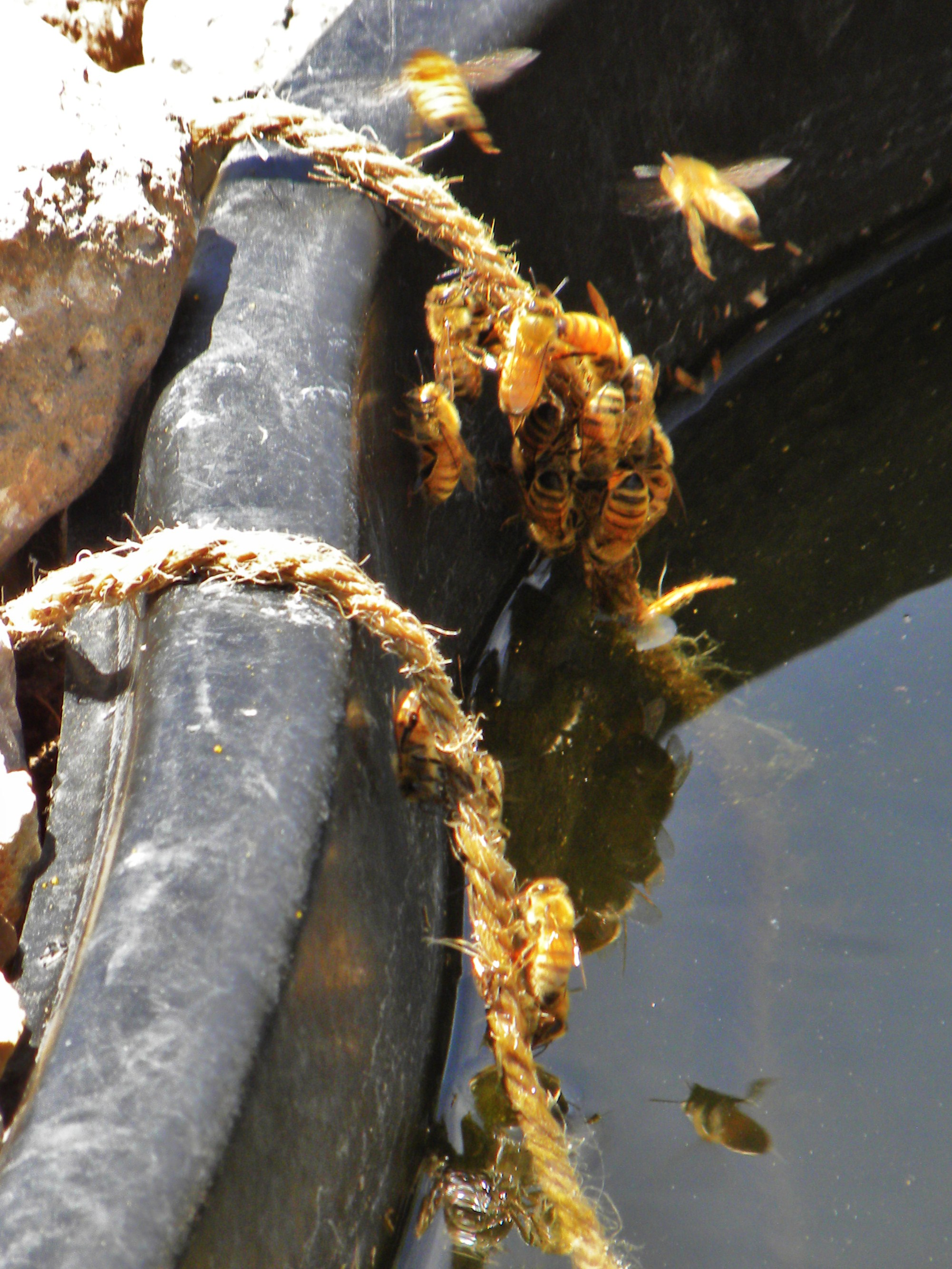 An phot of a honey bee community working together outside the hive