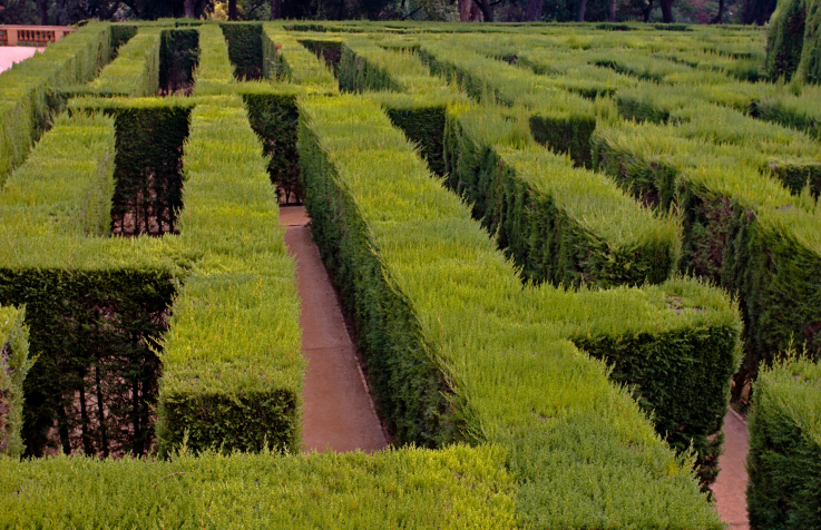 Lush aged and elaborate hedge maze