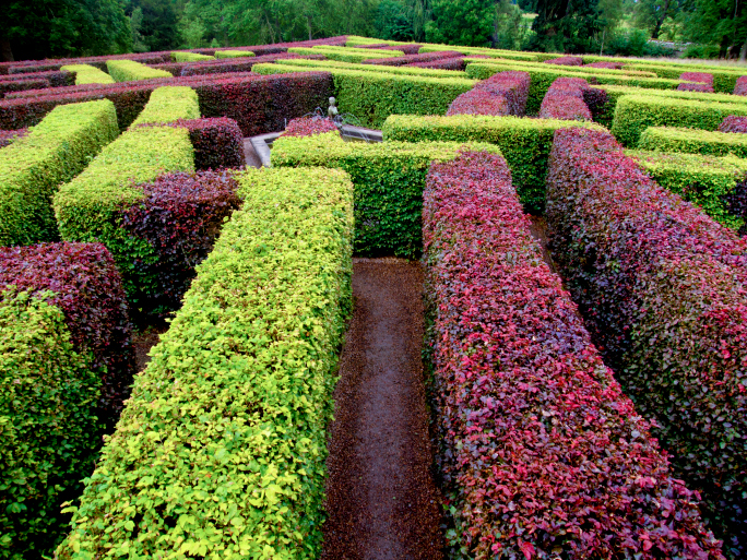 2-colored hedge maze alternating in green and purple