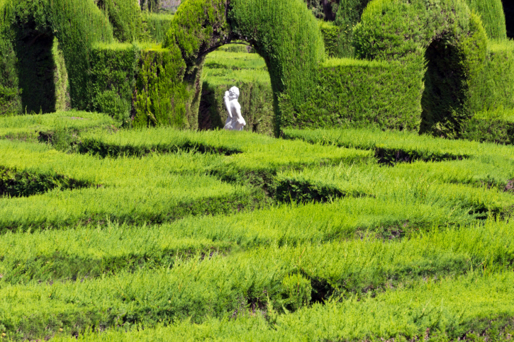 Close-up photograph of famous hedge maze with center of sculpted hedges into arches