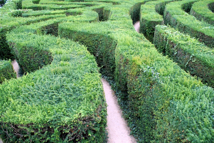 Close up of carefully pruned hedge maze
