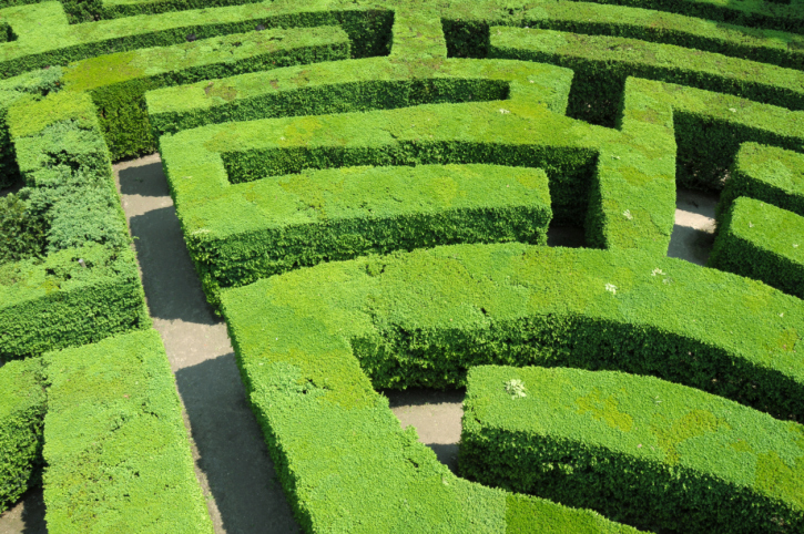 Close up photograph of a section of an extensive and comprehensive garden maze