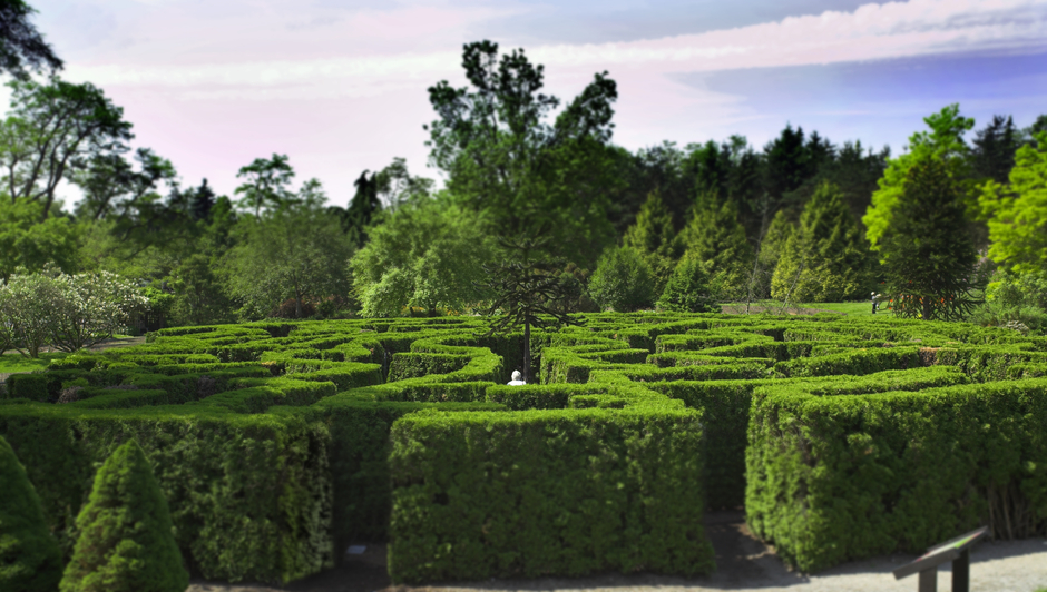Ground-level view of entrance to hedge maze