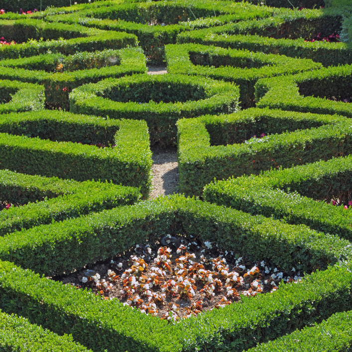 Geometric hedges fitted together like a puzzle resulting in a maze-like garden