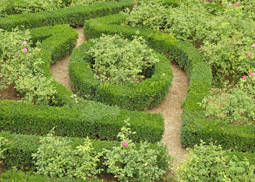 Interesting combination of a hedge maze with planted trees within the pathways