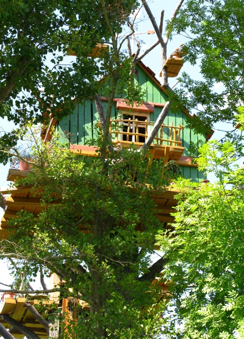 Incredible kids' tree house built way up in the trees.