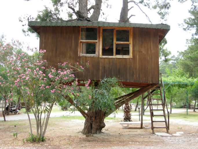 Large wooden tree house built on one low tree