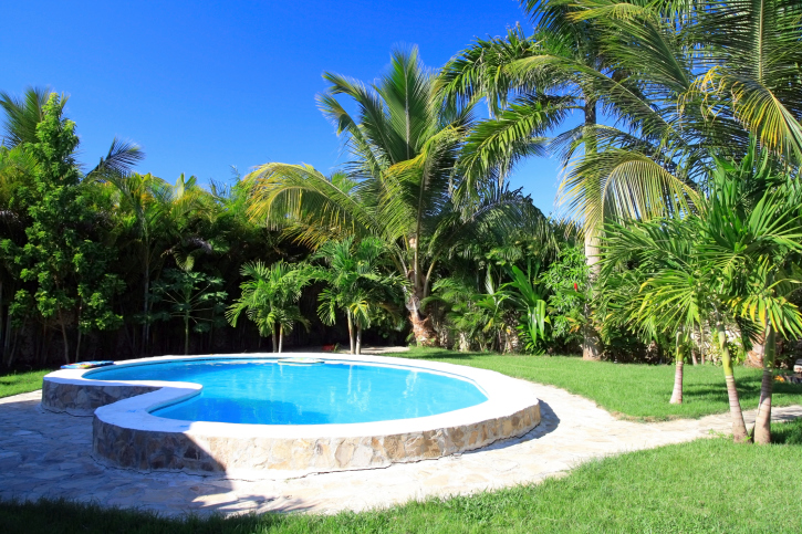 Slightly elevated kidney-shaped pool in the middle of a large grass yard surrounded by palm trees