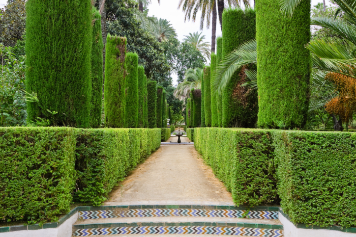 Picture of extensive topiary garden and walkway of manicured hedge topped with topiary pillars