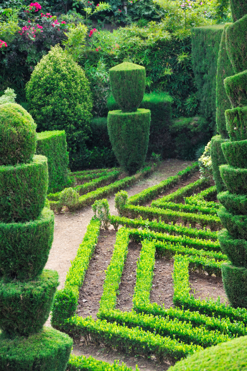 Large topiary garden containing pillar trees and low topiary hedges