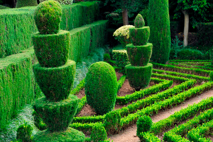 Topiary garden with double-tiered manicured hedge and rows of low hedges
