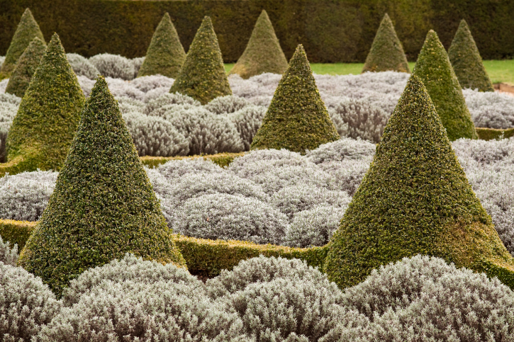 Topiary garden of cones and flower balls