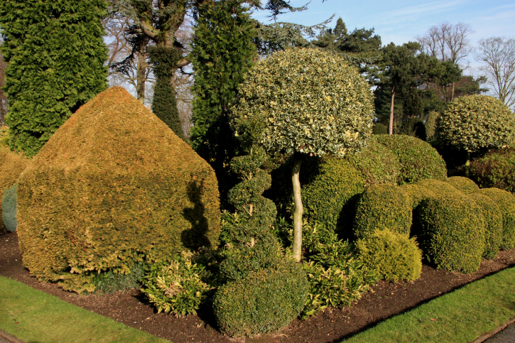 Garden loaded with various topiary shapes from a variety of different trees and plants