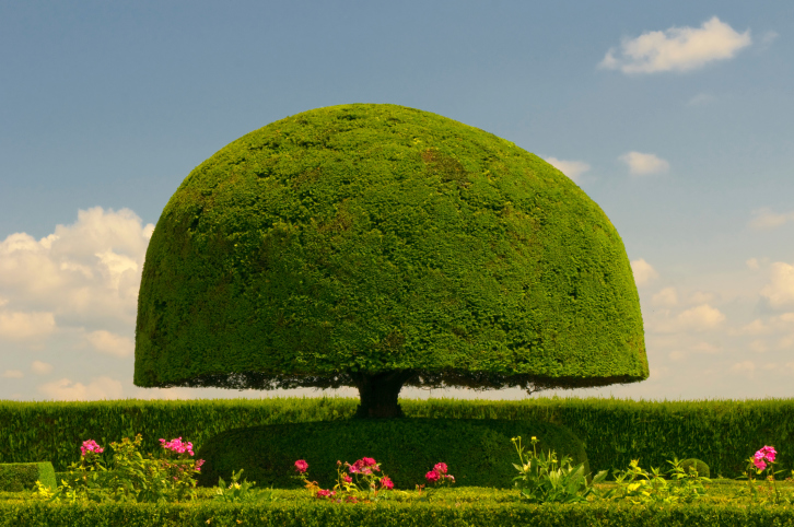 Spectacular mushroom topiary tree with hedge and flowers