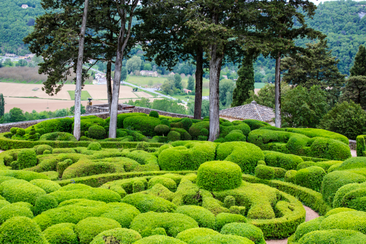 Huge field of topiary balls and other shapes amid large trees