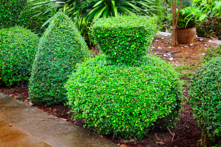 Topiary plant with ball for base and cube on top