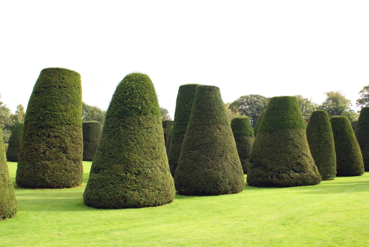 Large sprawling lawn with bunches of topiary trees in the shape of cones
