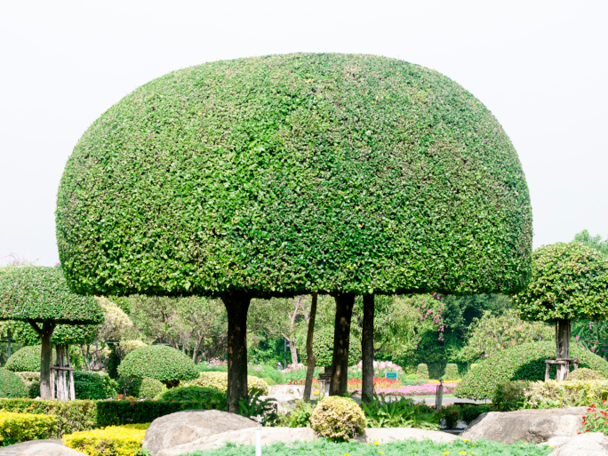 Two trees sculpted into one large mushroom