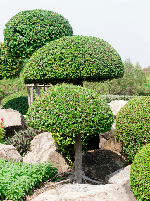 Series of three mushroom-shaped topiary trees in rock garden