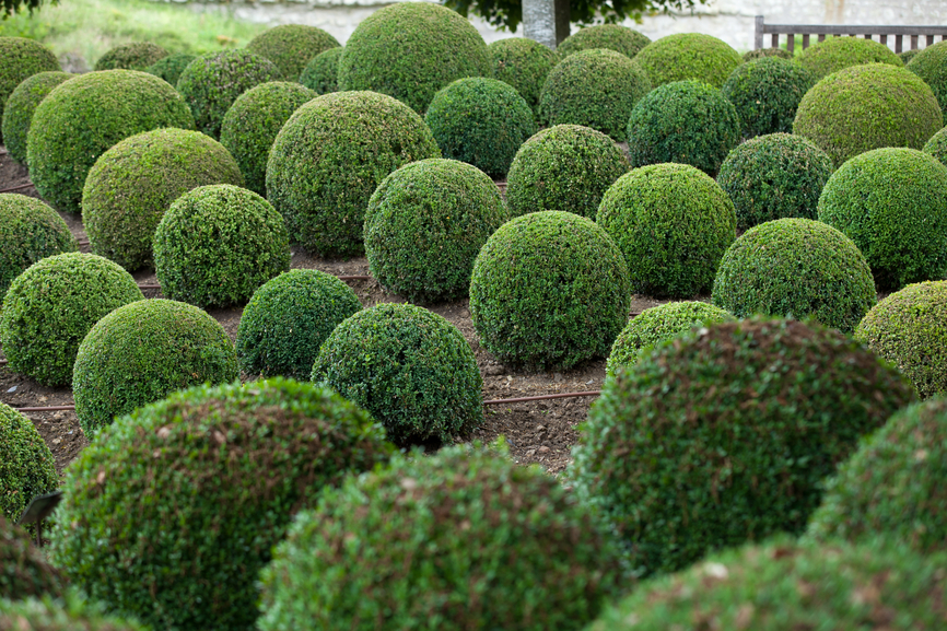 Large garden of topiary balls