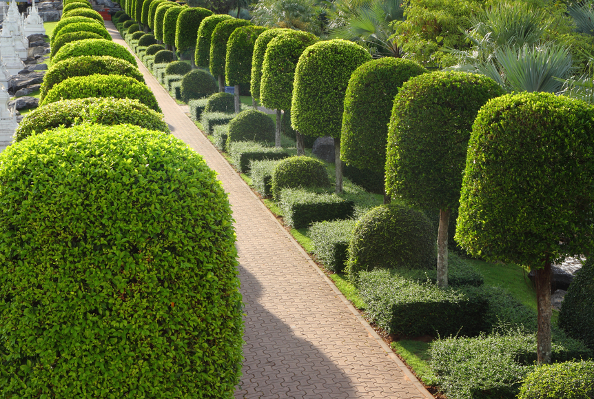 Walkway bordered with a series of small topiary trees