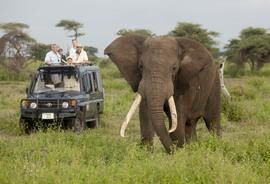 Elephant, African elephant, safari, Botswana, Botswana photographs, Okavango Delta