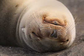 Sea lion, Galapagos Islands, Galapagos photography, beach photography