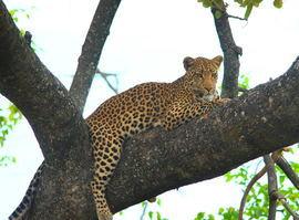 Grid leopard4xy
