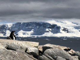 Penguins, Antarctica, Penguin, Images of Penguins in Antarctica, Penguin Photos