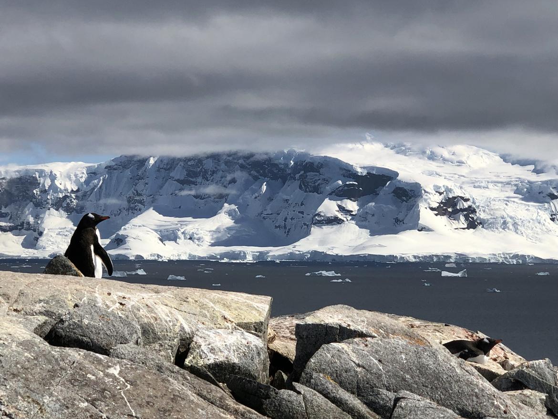 Penguins, Antarctica, Penguin, Images of Penguins in Antarctica, Penguin Photos