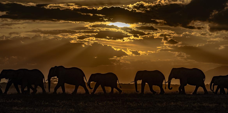 Elephant, Elephants, Elephant Herd, Images of Elephants, Elephants at Sunset, Elephants in Kenya, Elephant Photos