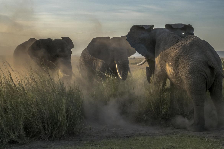 Elephants, Kenya, Photos of Elephants Kenya Elephants, Images of Elephants in Kenya, Elephant