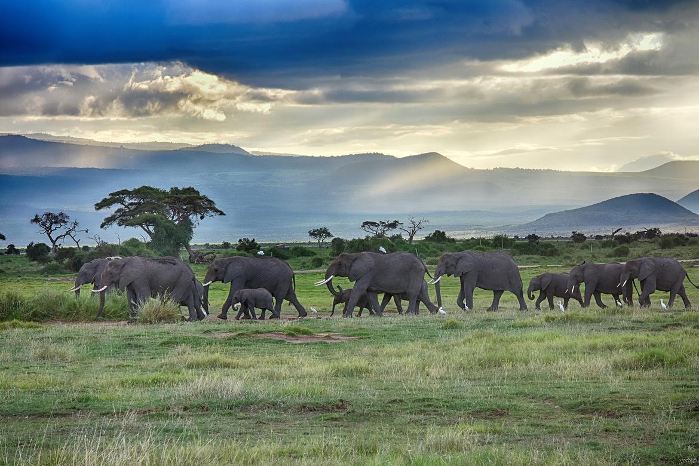 Elephants, Elephant Herd, Kenya, East African Elephants, Images of Elephants, Elephant Photos