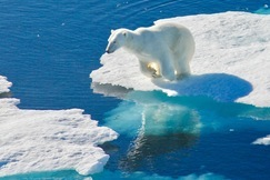 Polar Bears, Polar Bear, Nunavut, Photos of Bears, Polar Bear Images