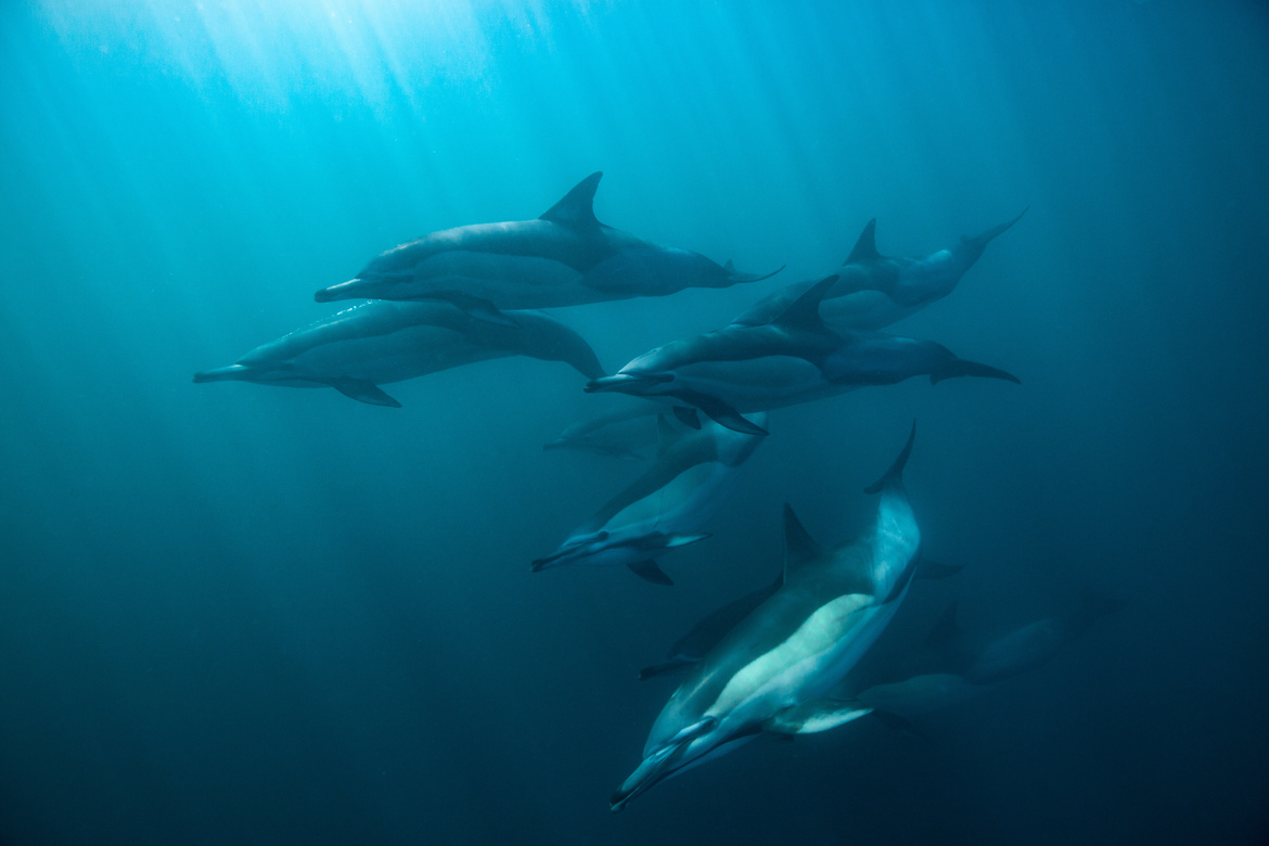 Dolphins, Dolphin, South Africa, Images of Dolphins, Dolphin Photos