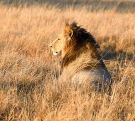 South Africa / Majestic Repose