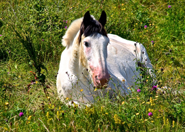 Horse, Horses, Wild Horse, Ireland, Images of Horses, Horse Photos