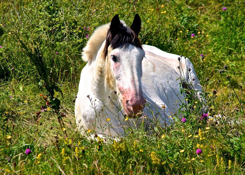 Horse, Horses, Wild Horse, Ireland, Images of Horses, Horse Photos
